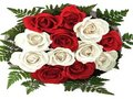 12 White & Red Roses Bunch