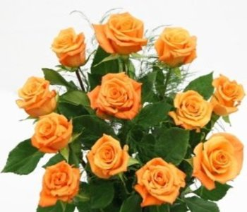 Bunch_of_orange_roses_10