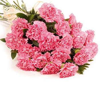 15-carnations-bunch