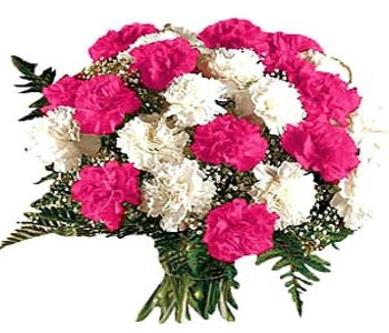12-mixed-color-carnations-bunch