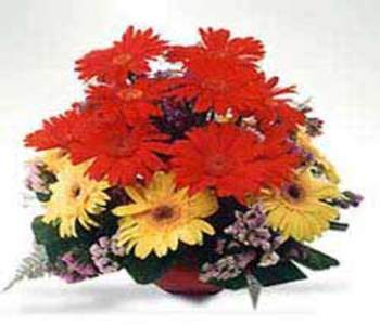 12_red___yellow_gerberas_in_a_pot